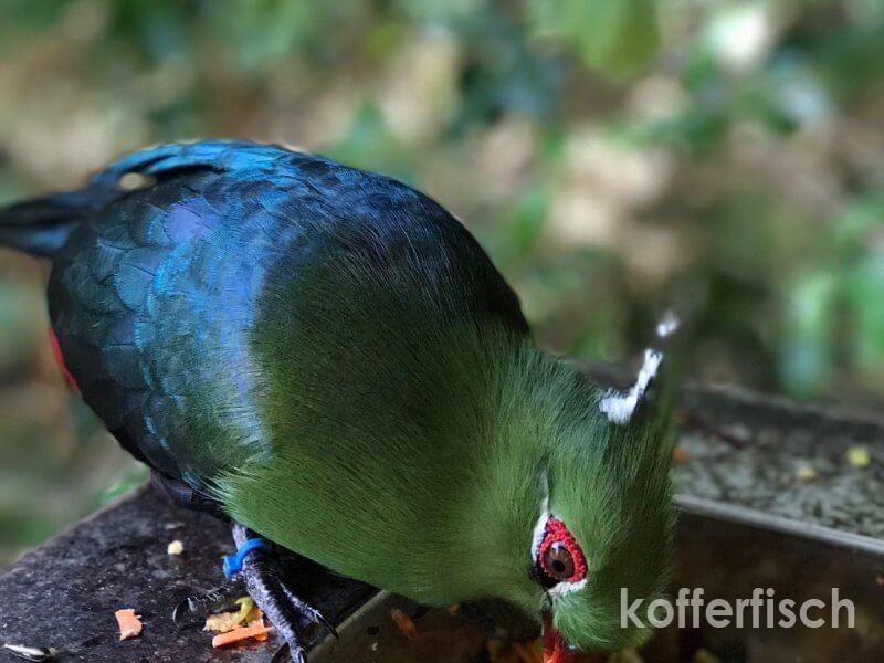 BIRDS OF EDEN – DIE GRÖSSTE VOLIERE DER WELT
